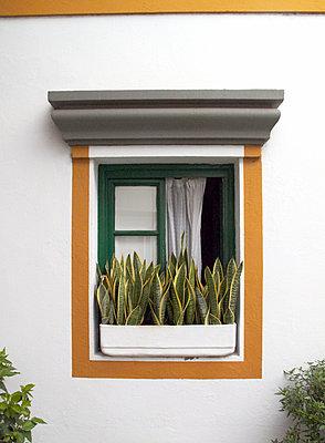 Window - p959m1054736 by Appold