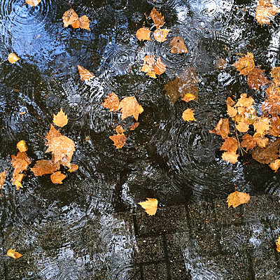 Puddle on pavement with utumn leaves - p300m1009080f by Gaby Wojciech