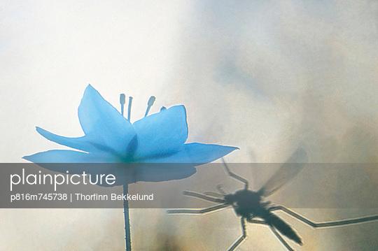 p816m745738 von Thorfinn Bekkelund