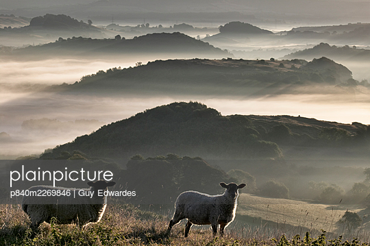 Two sheep and Marshwood Vale, Dorset, England, UK. - p840m2269846 by Guy Edwardes