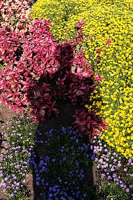 Schatten im Blumenbeet - p1340m1590910 von Christoph Lodewick