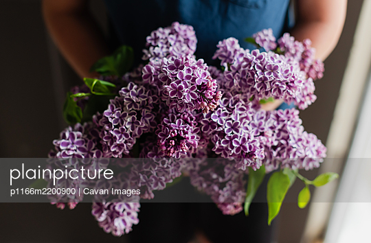 Cropped image of child's hands holding bouquet of lilac flowers. - p1166m2200900 by Cavan Images