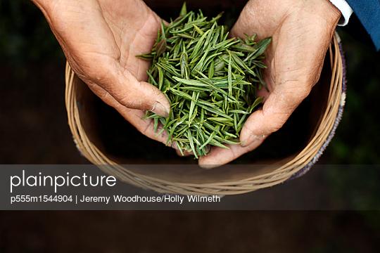 p555m1544904 von Jeremy Woodhouse/Holly Wilmeth