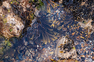 Looking down in to rockpool with seweed - p1047m1574930 by Sally Mundy