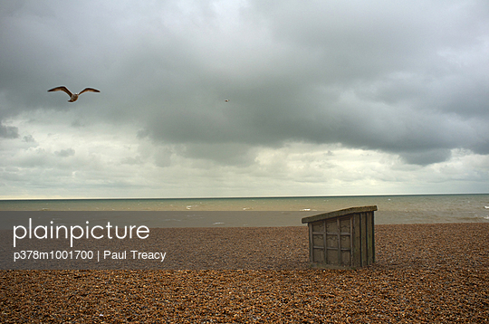Gull and box on beach - p378m1001700 by Paul Treacy
