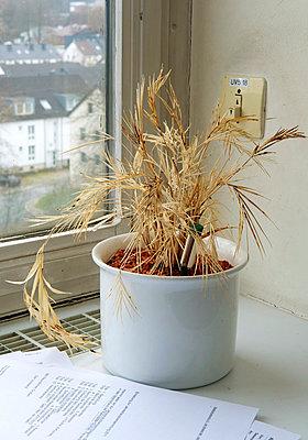 Tote Büropflanze mit Presseinfo - p1164m951940 von Uwe Schinkel