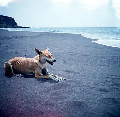 Dog at the beach - p1521m2064669 by Charlotte Zobel
