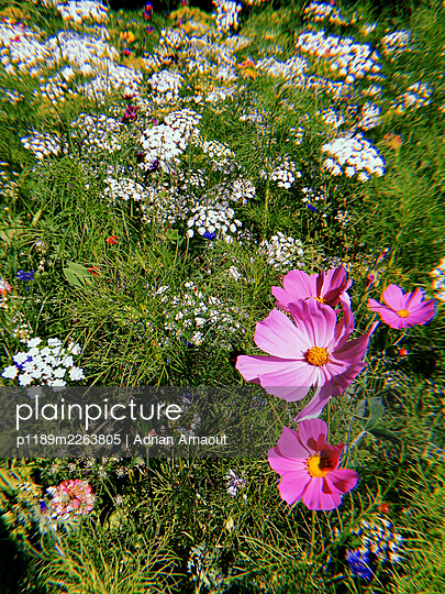 Perennials - p1189m2263805 by Adnan Arnaout