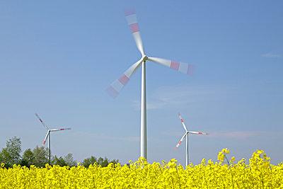 Windkraftwerke im Rapsfeld - p021m908664 von Siegfried Kuttig