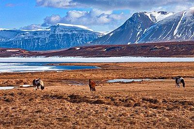 Landscape beauty - p1399m1444691 by Daniel Hischer