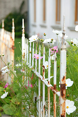 Fence - p249m661228 by Ute Mans