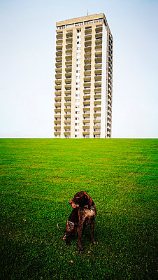 Dog sitting in fron of a high rise building - p551m1582915 by Kai Peters