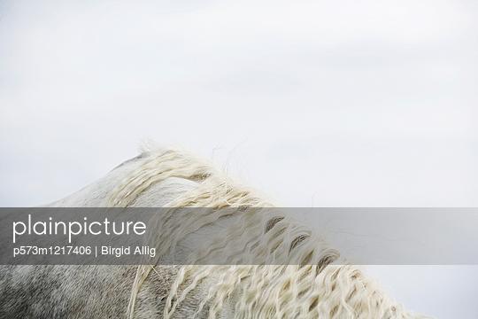 Pferderücken - p573m1217406 von Birgid Allig
