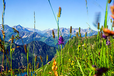 Summery flower meadow with panoramic view over the Allgaeu mountains, Oberstdorf, Germany - p1316m1202985 by Martin Siering