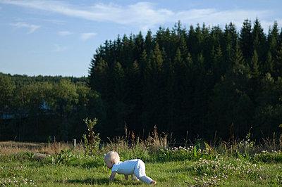 A little boy crawling on a field Sweden - p5281681f by Johan Willner