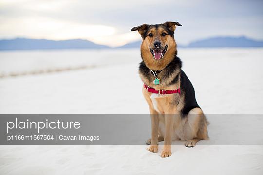 p1166m1567504 von Cavan Images