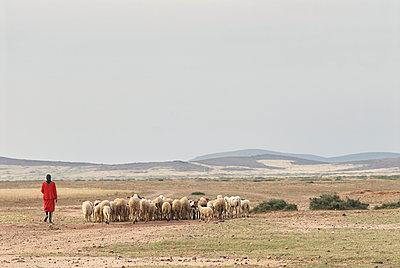 Shepherd with flock - p133m1044516 by Martin Sigmund