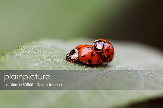 p1166m1163509 von Cavan Images