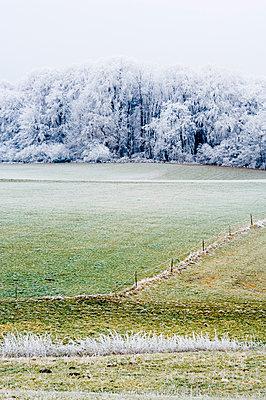 Blick über eine Wiese auf einen Wald im Raureif, Leoni, Bayern, Deutschland - p1316m1160377 von Peter von Felbert