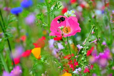 Flower field - p148m2111291 by Axel Biewer
