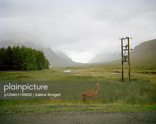 Highlands - p1294m1159632 von Sabine Bungert