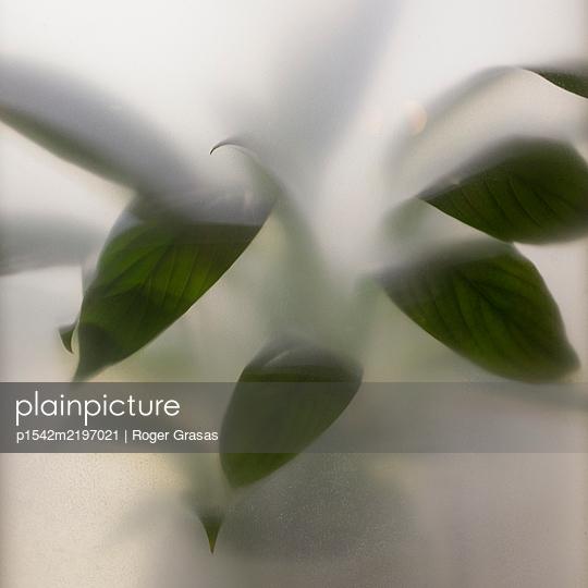 Blätter - p1542m2197021 von Roger Grasas