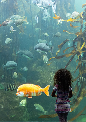 Two Oceans Aquarium, girl marvels at sea animals - p1640m2246215 by Holly & John