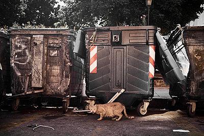 Stray cat - p851m2073194 by Lohfink