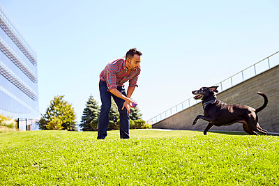 A man playing with his dog. - p1166m2157445 by Cavan Images