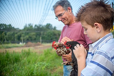Mature man and boy petting hens on farm - p924m1081690f by Sue Barr