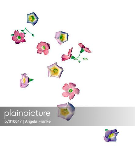 Blumen - p7810047 von Angela Franke