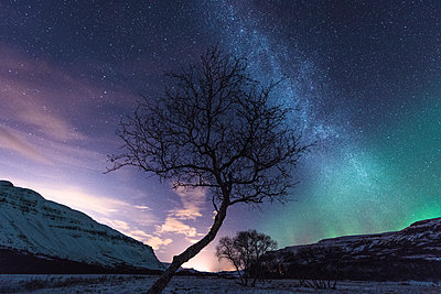 Tree, Aurora Borealis in background, Hvalfjordur, Iceland - p429m1224200 by Oscar Bjarnason