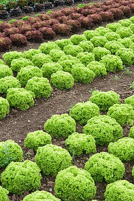 Leaf salad - p4510692 by Anja Weber-Decker