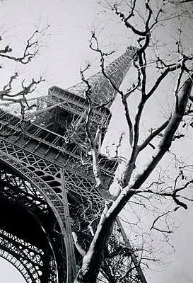 Eiffel Tower and Tree - p1072m829252 by Neville Mountford-Hoare