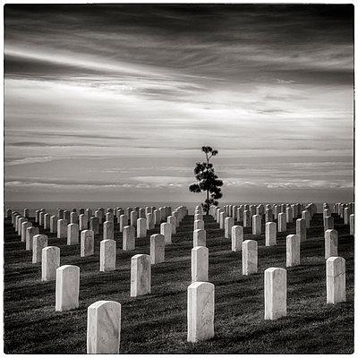 Gräber auf einem Soldatenfriedhof  - p1154m1110200 von Tom Hogan