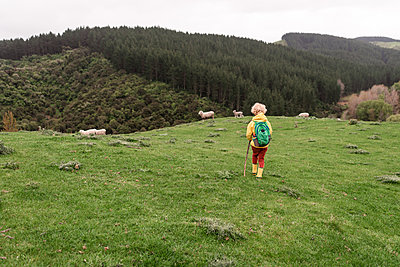 Young child walking in New Zealand field with sheep - p1166m2280882 by Cavan Images