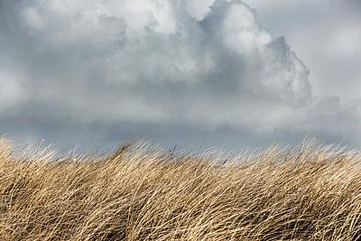 Dünengras vor Wolkenhimmel - p248m1116328 von BY