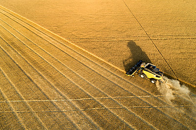 Aerial view of ombine harvesting a golden wheat field; Beiseker, Alberta, Canada - p442m2058106 by Michael Interisano