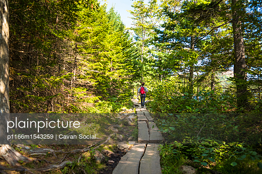 Rear view of female hiker standing on wood amidst forest at Acadia National Park - p1166m1543259 by Cavan Social