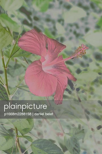 Red flower - p1668m2288158 by daniel belet