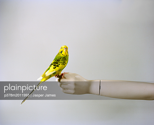 plainpicture - plainpicture p378m2011993 - Bird on hand - plainpicture/Millennium/Jasper James