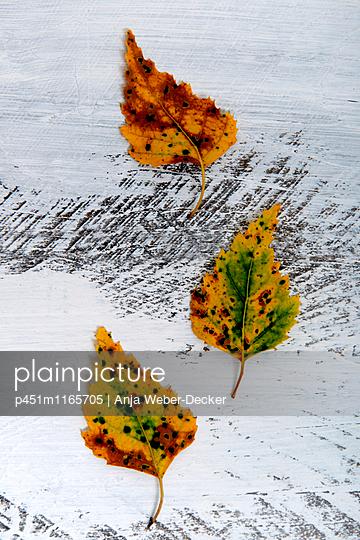 Herbstlaub - p451m1165705 von Anja Weber-Decker