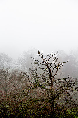 Leafless trees shrouded in fog - p1057m2044762 by Stephen Shepherd