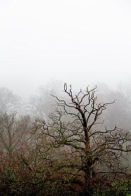 Blattlose Bäume in Nebel gehüllt - p1057m2044762 von Stephen Shepherd