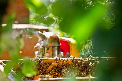 Bienenkiste mit Smoker, Freiburg im Breisgau, Schwarzwald, Baden-Württemberg, Deutschland - p1316m1160718 von Daniel Schoenen