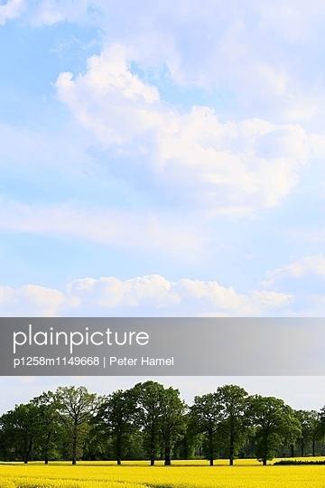 Rapslandschaft mit Wolken - p1258m1149668 von Peter Hamel