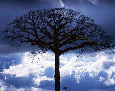 Baum auf Costa Rica - p1016m792575 von Jochen Knobloch