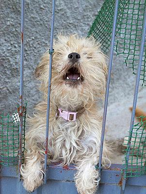 Barking dog - p1021m988998 by MORA
