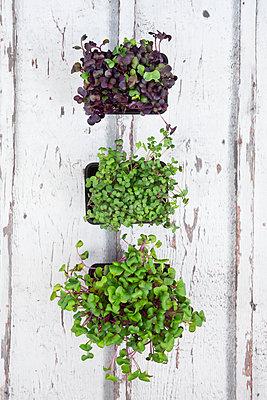 Variety of organic cress - p300m1469705 by Larissa Veronesi