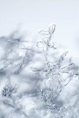 Eiskristalle - p739m769595 von Baertels